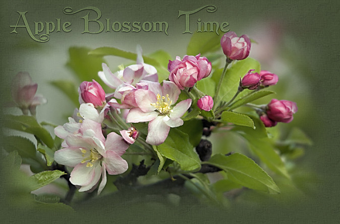 Apple Blossom Time written by Joyce Ann Geyer with love ................