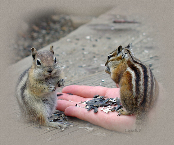 Chipmunks and Squirrels written by Joyce Ann Geyer with love..........